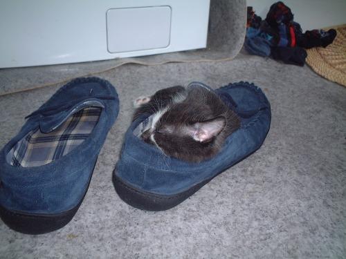 Smoky_in_slipper