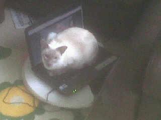 Willow_on_laptop