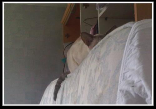 Cosmo_on_mattress