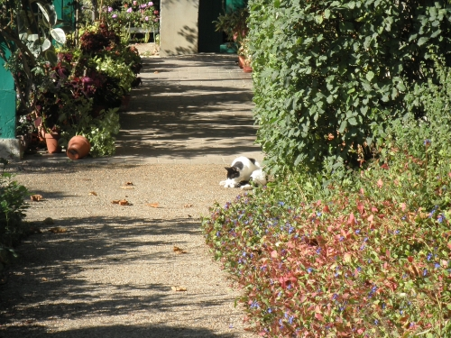 Giverny_cat