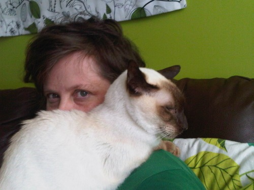 Malteser_cat_therapy