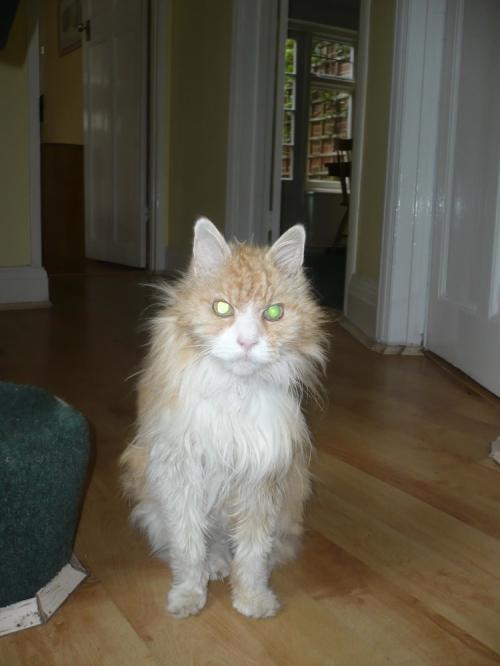 Mr_danny_-_judiths_cat
