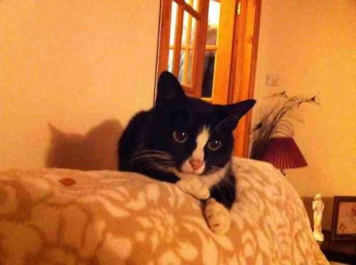 Mrs_duffle_simones_cat