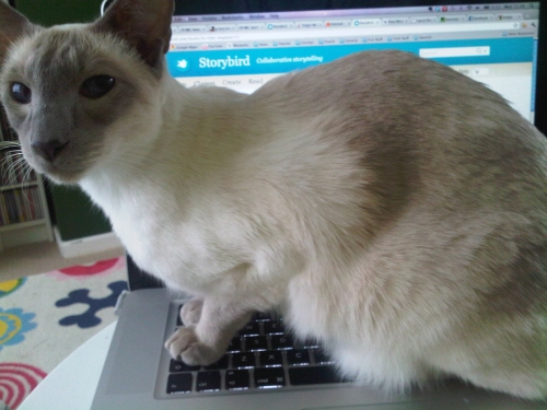 Willow_on_the_mbp
