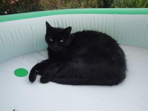 Petite_noire_paddling_pool_1