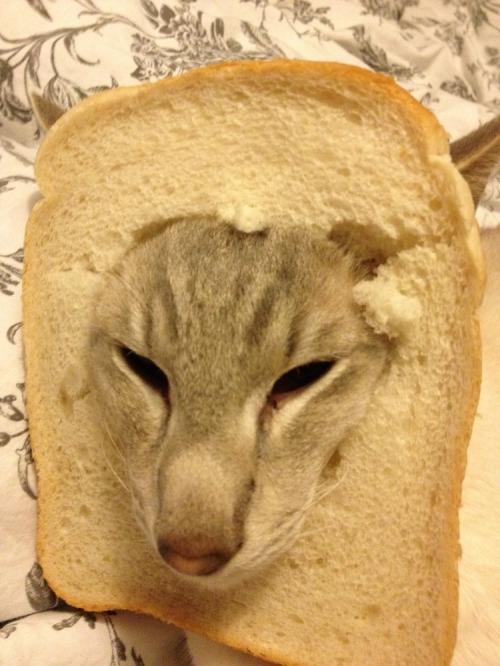 Cosmo_breaded
